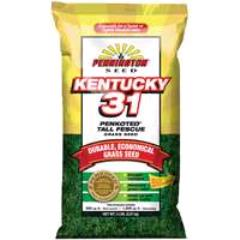 Rental store for Grass Seed KY 31 Tall Fescue 5lb. in Aberdeen OH